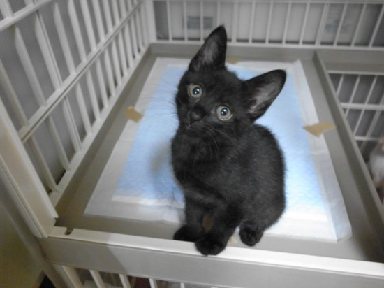 ラブリー,黒猫,画像,まとめ006