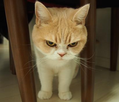 ちょい悪,猫,画像,まとめ006
