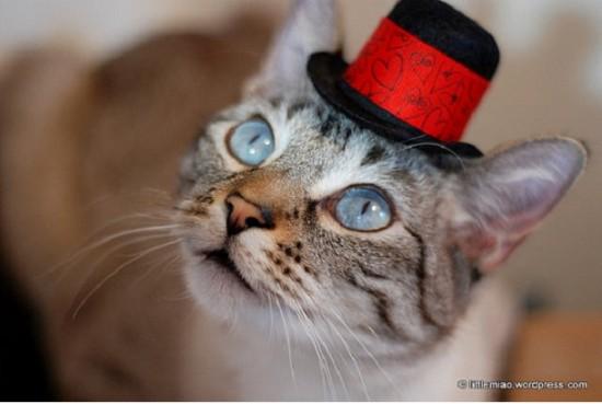 キュン,帽子,ネコ,画像,まとめ007