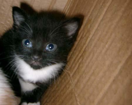 ラブリー,黒猫,画像,まとめ007