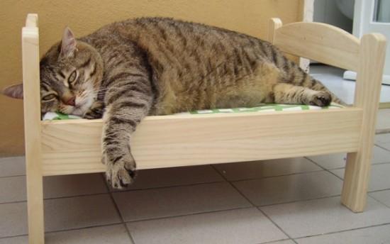 モフモフ,猫,ベッド,画像,まとめ008