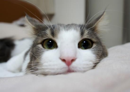 可愛い,ネコ,画像,まとめ008