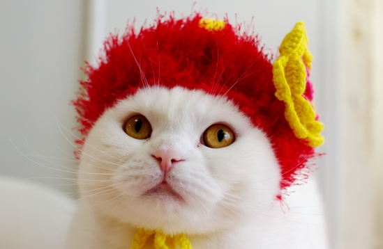 キュン,帽子,ネコ,画像,まとめ008