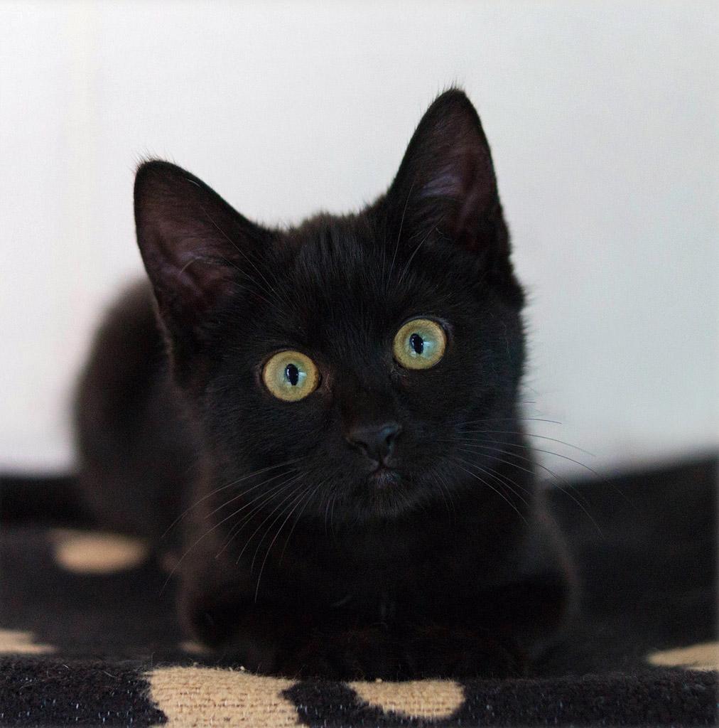 ラブリー,黒猫,画像,まとめ008