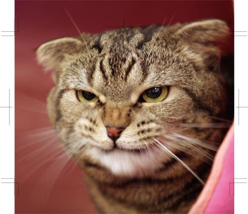 ちょい悪,猫,画像,まとめ008