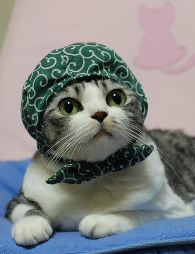 キュン,帽子,ネコ,画像,まとめ009