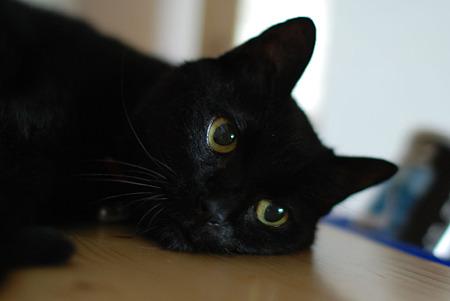 ラブリー,黒猫,画像,まとめ009