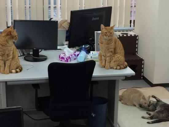職場,猫,画像,まとめ010