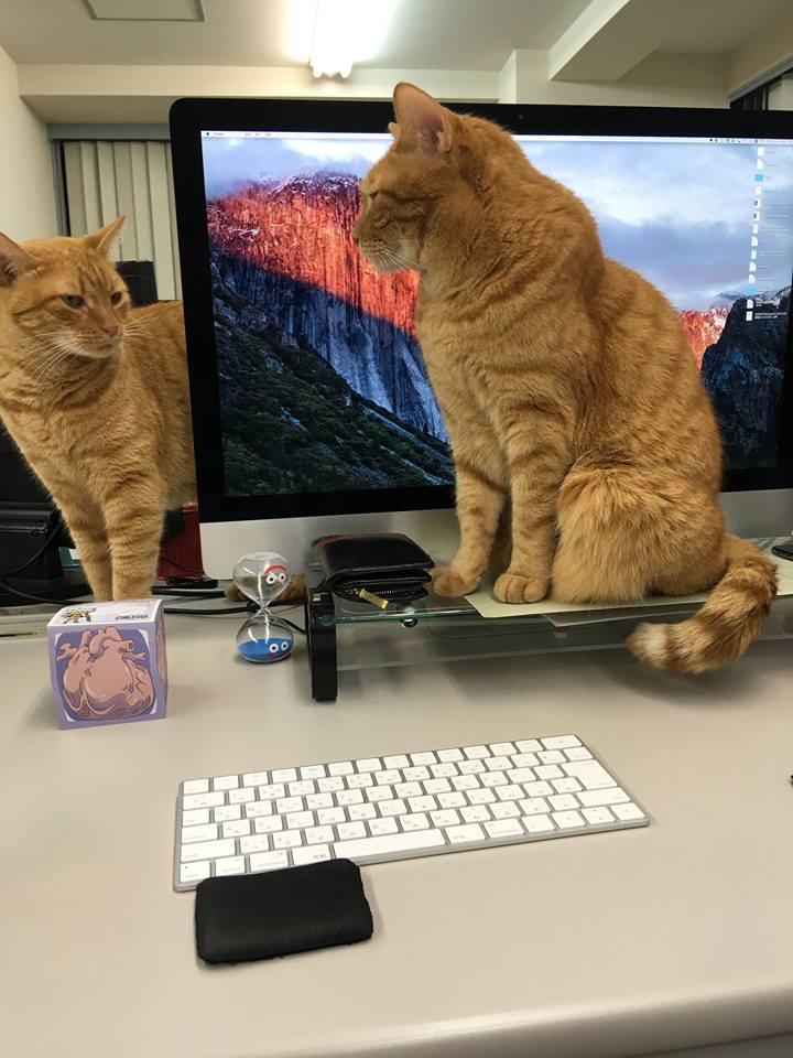 職場,猫,画像,まとめ011