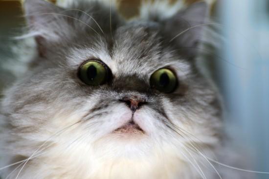 ちょい悪,猫,画像,まとめ011