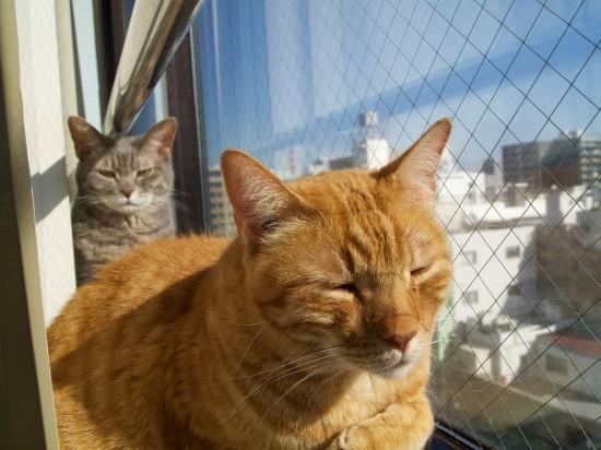 職場,猫,画像,まとめ012