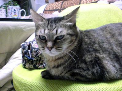 ちょい悪,猫,画像,まとめ012