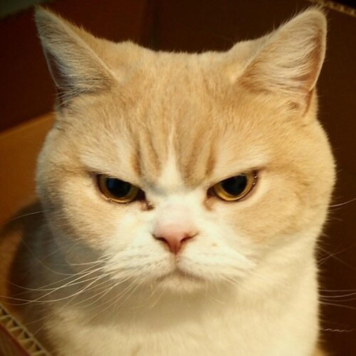 ちょい悪,猫,画像,まとめ013