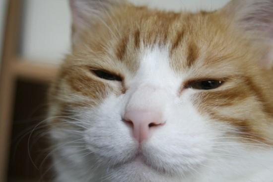 可愛い,ネコ,画像,まとめ013