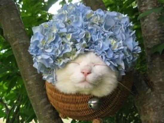キュン,帽子,ネコ,画像,まとめ013