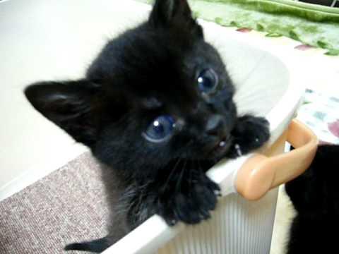 ラブリー,黒猫,画像,まとめ013
