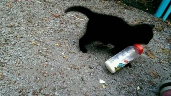 泥棒,ネコ,犯行,画像,まとめ014