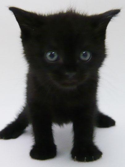 ラブリー,黒猫,画像,まとめ014
