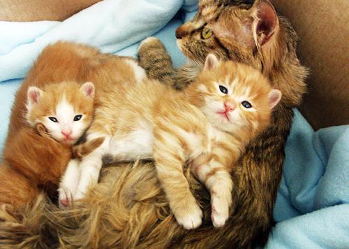 癒し,親子,猫,画像,まとめ016