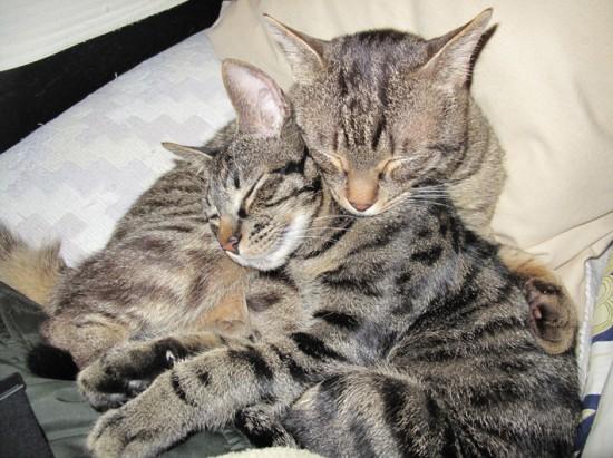可愛い,ネコ,画像,まとめ016