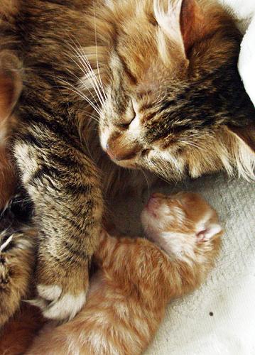 癒し,親子,猫,画像,まとめ017