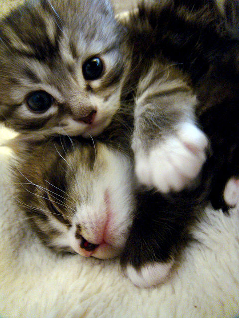 可愛い,ネコ,画像,まとめ017