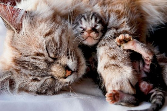 癒し,親子,猫,画像,まとめ020