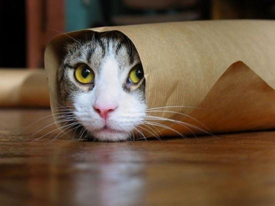 可愛い,ネコ,画像,まとめ021