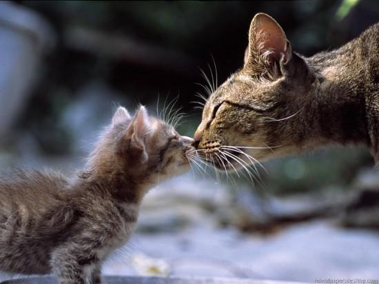 癒し,親子,猫,画像,まとめ022