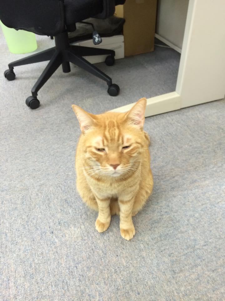 職場,猫,画像,まとめ023