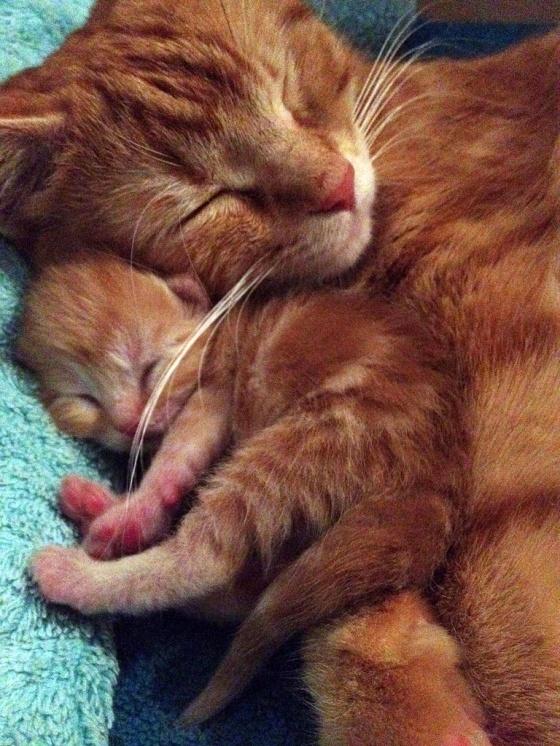 癒し,親子,猫,画像,まとめ030