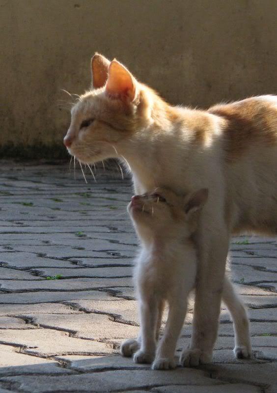 癒し,親子,猫,画像,まとめ036