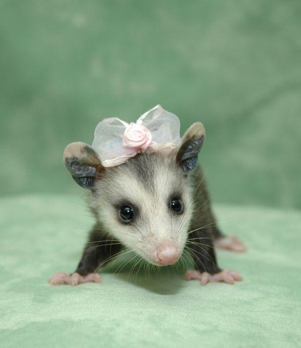 オシャレ,可愛い,動物,画像,まとめ024