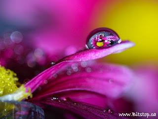 キレイ,水滴,花,アート,画像,まとめ001