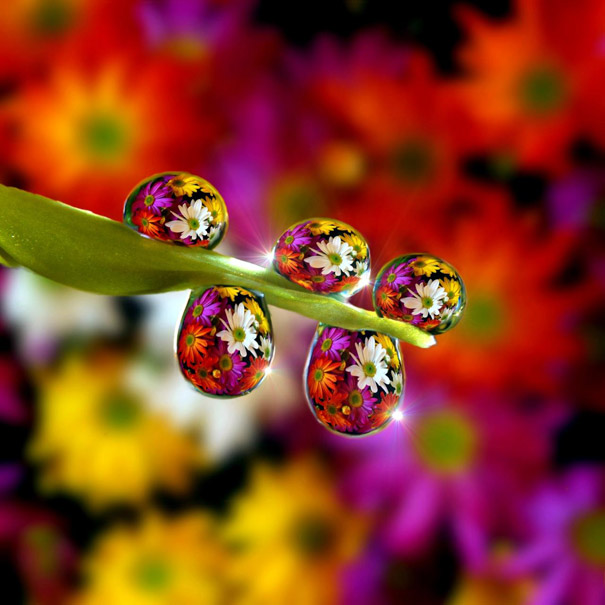 キレイ,水滴,花,アート,画像,まとめ002