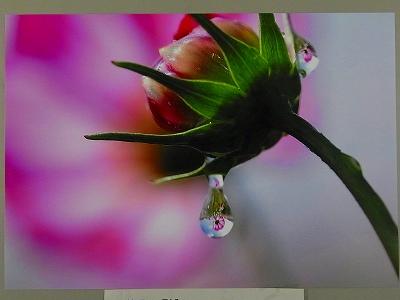 キレイ,水滴,花,アート,画像,まとめ003