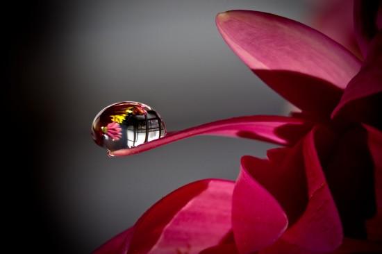 キレイ,水滴,花,アート,画像,まとめ004