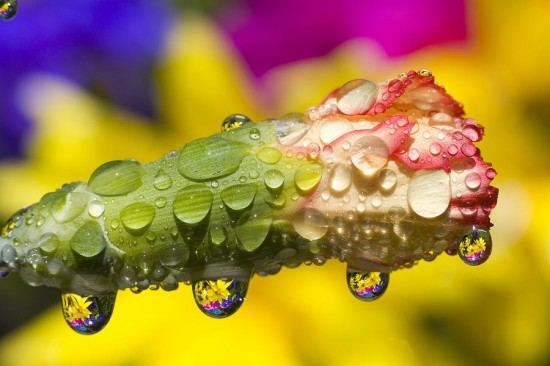キレイ,水滴,花,アート,画像,まとめ005