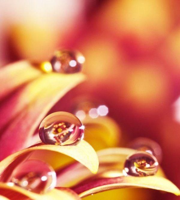 キレイ,水滴,花,アート,画像,まとめ007