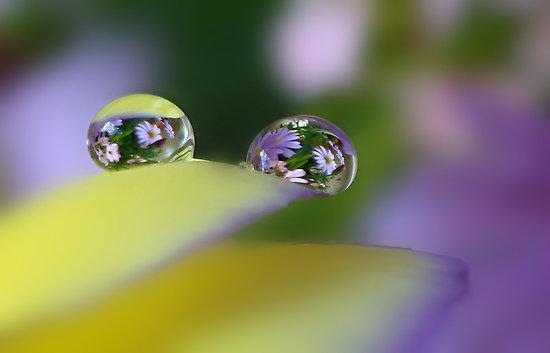 キレイ,水滴,花,アート,画像,まとめ009