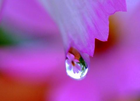 キレイ,水滴,花,アート,画像,まとめ010