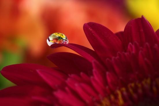 キレイ,水滴,花,アート,画像,まとめ011