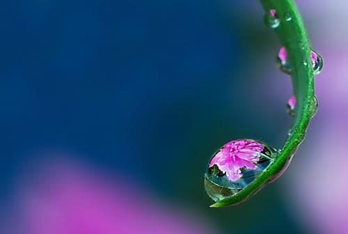 キレイ,水滴,花,アート,画像,まとめ012