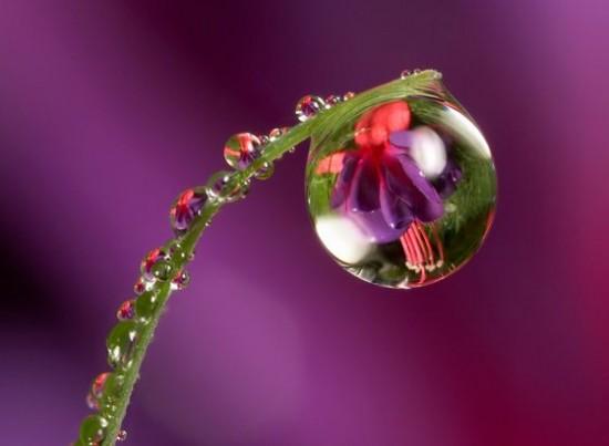 キレイ,水滴,花,アート,画像,まとめ014