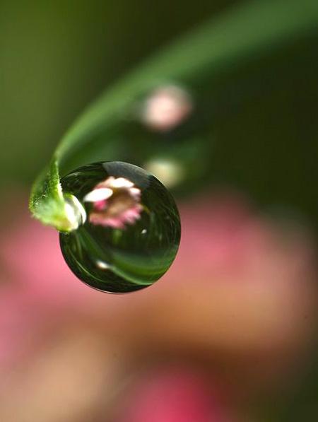 キレイ,水滴,花,アート,画像,まとめ015