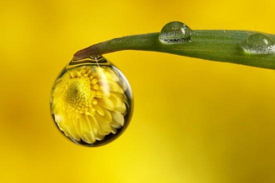 キレイ,水滴,花,アート,画像,まとめ016