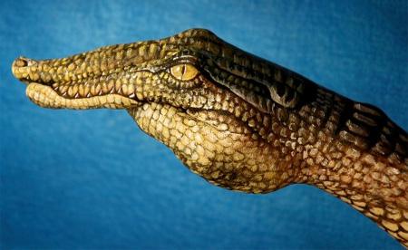 手,動物,ボディペイント,画像,まとめ016