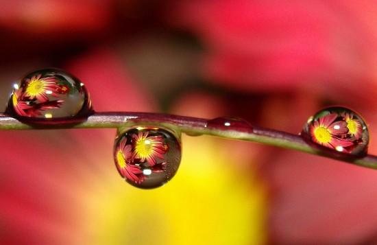 キレイ,水滴,花,アート,画像,まとめ017