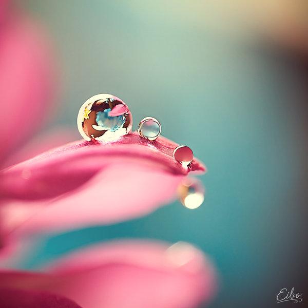 キレイ,水滴,花,アート,画像,まとめ018