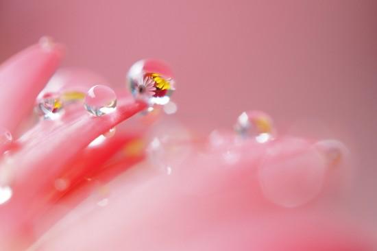 キレイ,水滴,花,アート,画像,まとめ020
